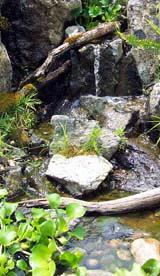 Narural biological filter veggie filter plant pond for Pond veggie filter