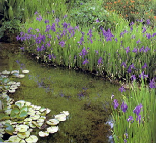 Pond Perimeter Plants Pond Landscaping Natural Pondscapes