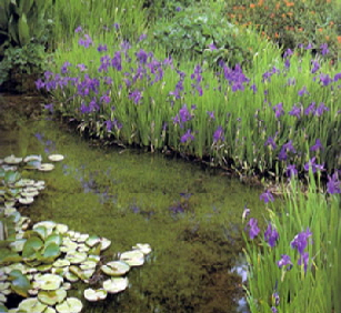 Pond perimeter plants pond landscaping natural pondscapes for Plants around ponds