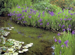 Pond perimeter plants in Maryland