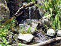 <b>Pondless Waterfalls</b>