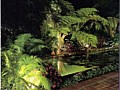 <b>swimming pool landscape lighting</b><br>pond landscape lighting