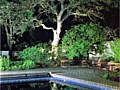 <b>up lit tree</b><br>uplighitng picture of hightlighting tree